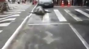 На дорогу в Бразилии выполз гигантский морской слон
