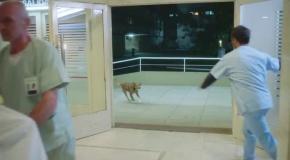Очень преданный пес долго ждал у больницы