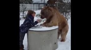 Не все медведи одинаково опасны...
