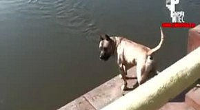 Собака-пловец умеет считать