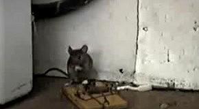 Визучий мышонок