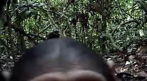 Любопытные обезьянки нашли скрытую камеру