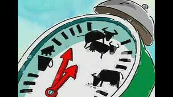 03 янв.14 Категория видео Приколы. Смотреть онлайн видео бык который