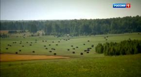 О сельском хозяйстве в России в программе Андрея Малахова