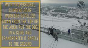 Рабочие спасают собаку в Чернобыле