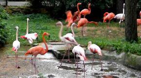Рижский зоопарк  ( часть 1 )