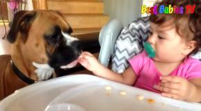 Cute Baby and Boxer Dog Compilation
