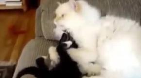 Котёнок доприставался
