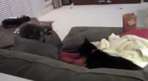 Так напугать кота  у него наверное сердце в пятки ушло