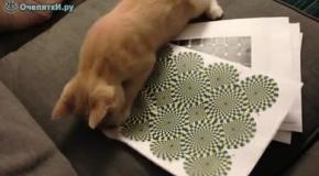 Реакция котёнка на иллюзию