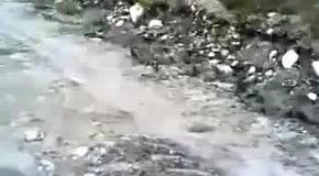 Бульдог гонится за зайцем