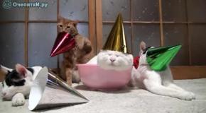 Коты зомби