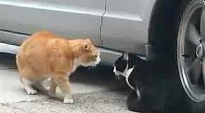 Ржачные коты :)