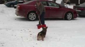 Собаки радуются первому снегу