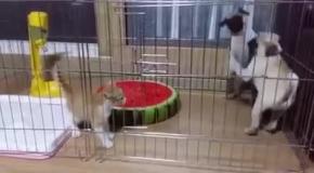 Когда один кот стоит двух собак