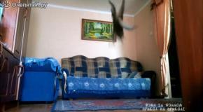 Кошачье сальто назад