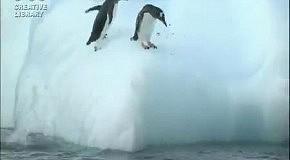 Пингвины и айсберг