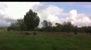 Русский мужик научил медведя цирковым трюкам