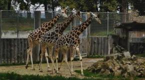 Рижский зоопарк  ( часть 3 )