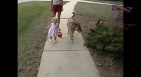 Малыши и их собаки.