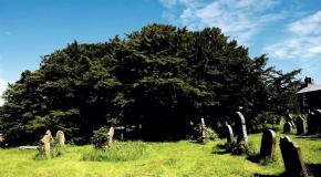 5 Самых старых деревьев в мире