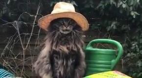 Кот-хипстер в шляпе