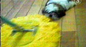 !Stupid dog