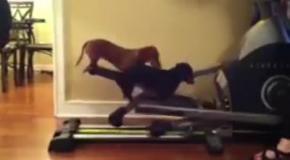 Тренировки с животными