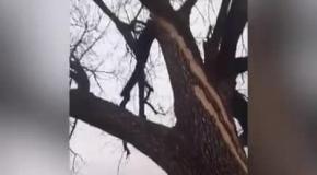 Молния ударила в дерево