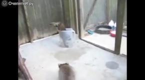 Смешные еноты