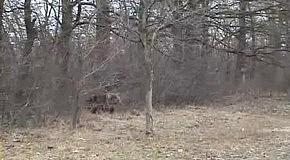 Медведь вышел на дорогу