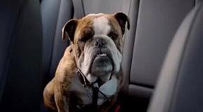 Собака съела ключи от машины