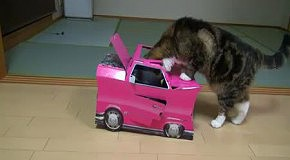 Кот Мару и его розовая машина