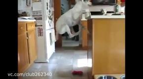 Очень голодный пес