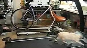 Коти тренируютса