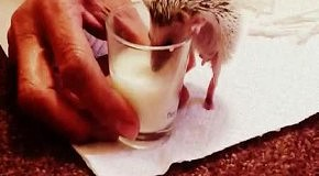 Стакан молока, пожалуйста