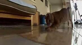 Коты против лазера