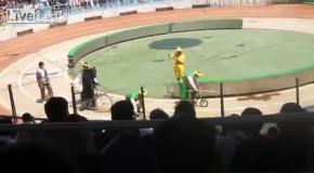 Медведь на велосипеде съел обезьяну в цирке Шанхая