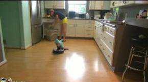 Кот в костюме акулы патрулирует кухню