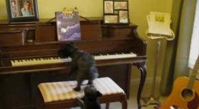 Собака поет и играет на пианино