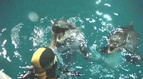 "Дайвінг з дельфінами. ""И тебя вылечим..."""