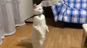 Ну и походочка у кота!