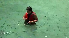 Атака новорожденной акулы: самые пугающие видео с акулами