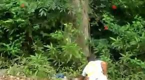 Летающий ленивец
