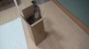 Мару и коробка. Дубль 13