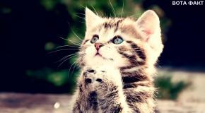 7 Признаков, что кошка вас ненавидит