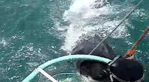 Акула против ирландца: самые пугающие видео с акулами