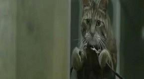 Коты с пальцами клонируют молочников