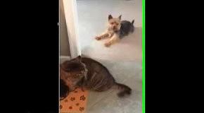 Собака хитростью отбила еду у кота