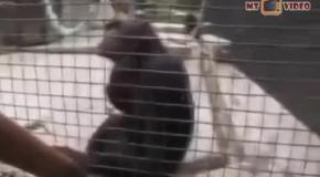 Прикольные обезьяны